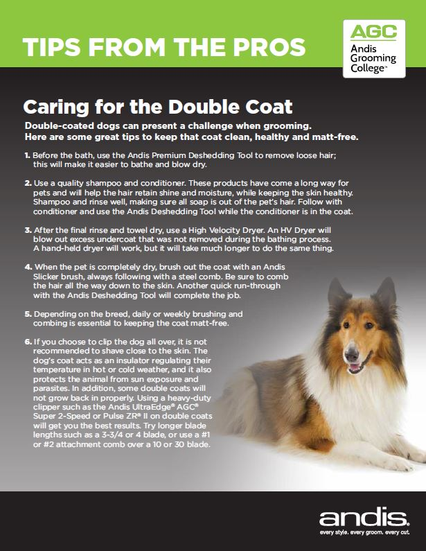 How to Care for the Double Coat