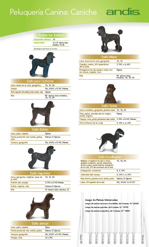 Poodle Grooming Guide — Spanish