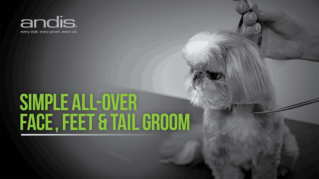 Dog Grooming 101 - Face, Feet and Tail Groom