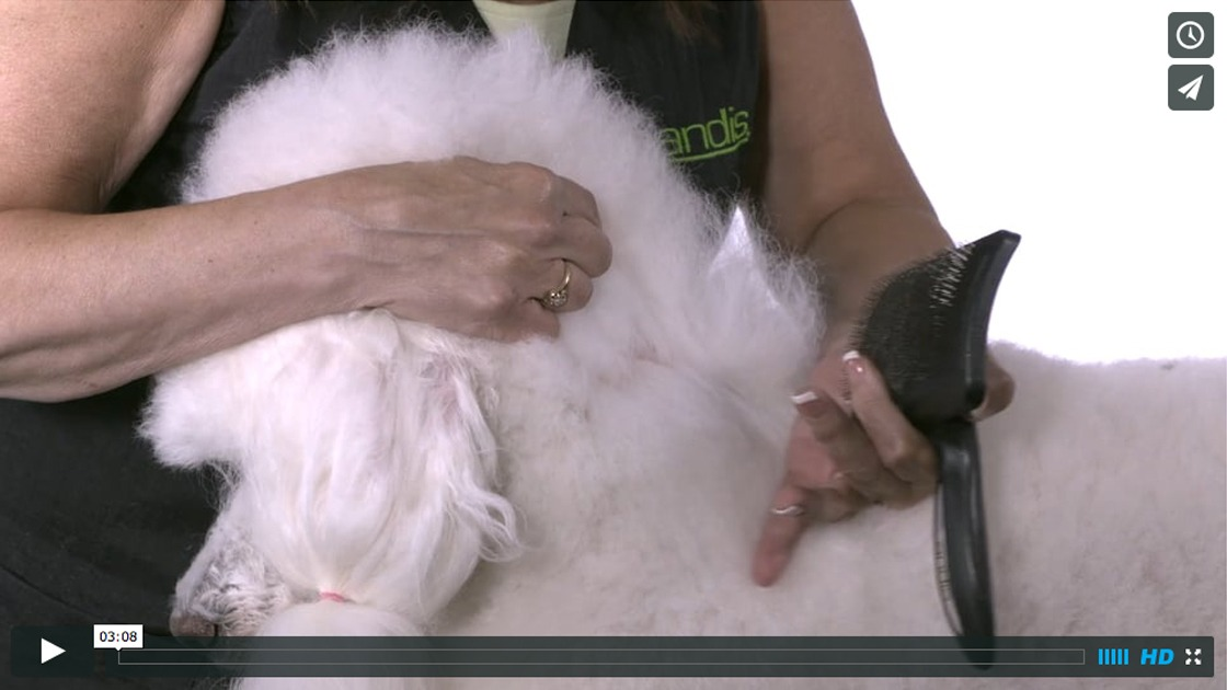 Proper Brushing And Combing Techniques - Andis How-to Dog Grooming Videos