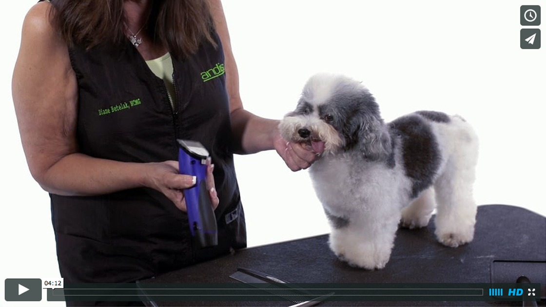 How To Clip And Shape A Dog