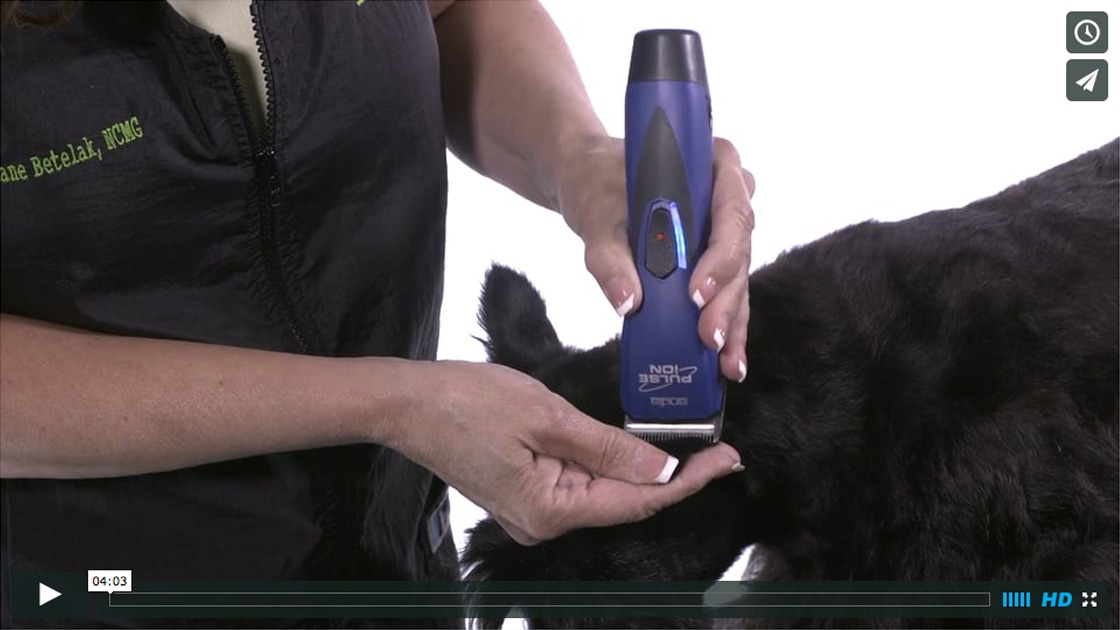 How To Properly Tip Ears - Andis How-to Dog Grooming Video Tips