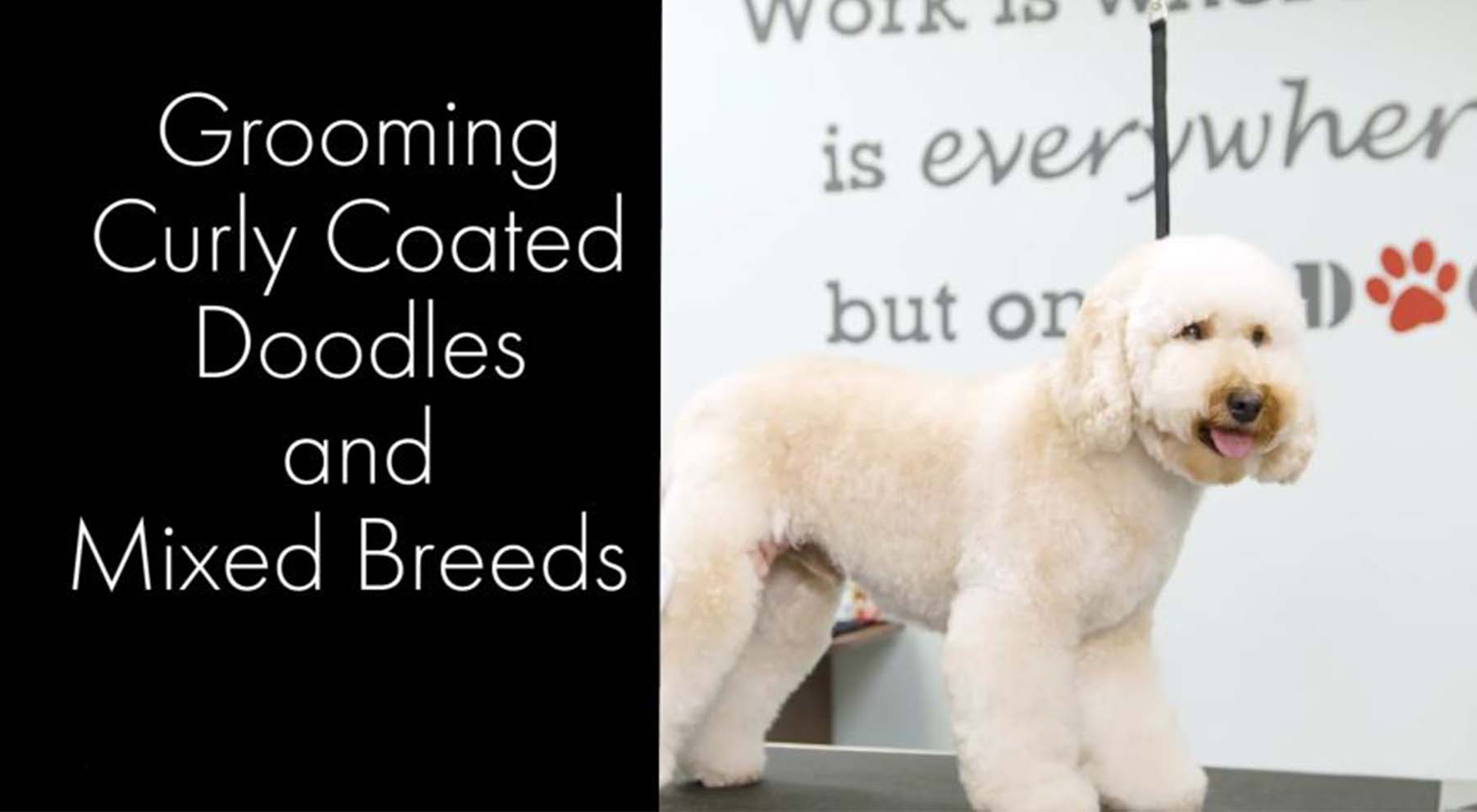 Curly Coated Doodles and Mixed Breeds Grooming